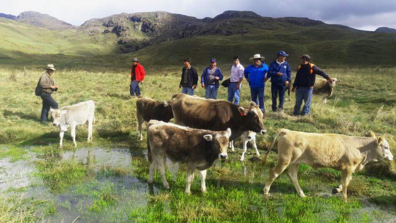 Habilitarán 5 mil hectáreas de pasto mejorado en La Libertad